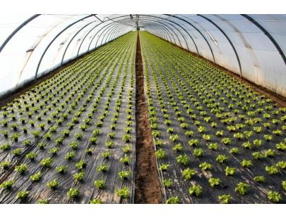 bache serre de jardin 400gm pvc 21x3m bache transparente arme pour serre serre tunnel - Bache Jardin