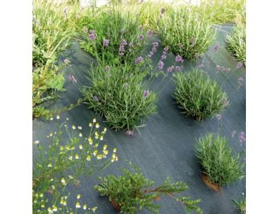 Toile de Paillage 86g/m² - 1.05 x 100 m - paillage jardin - bache de sol